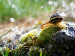 Postal: Caracol sobre la humedad de la hierba