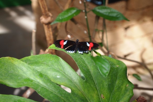 Una bella mariposa sobre una gran hoja verde