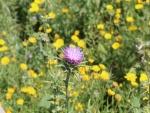 Flor con espinas en el campo