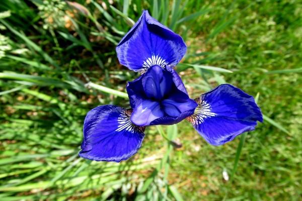 Un bello iris