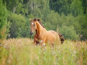 Hermoso caballo trotando entre la hierba