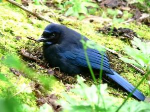 Pájaro negro posado en la hierba junto a una lombriz