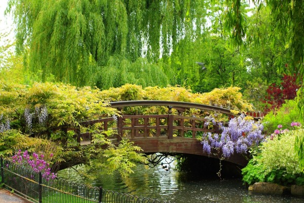 Hermoso puente cubierto de plantas y flores
