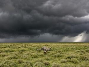 Un guepardo corriendo velozmente por el campo