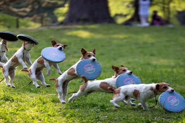 Secuencia de un perro jugando con un frisbee