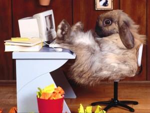 Conejo frente a un ordenador