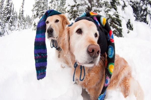 Perros con originales gorros para el frío de la nieve