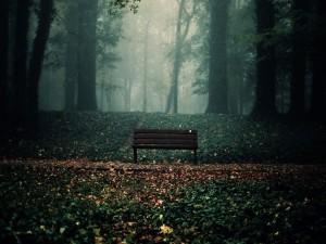 Banco en un bosque otoñal