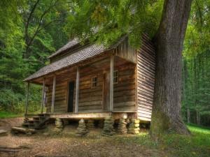 Postal: Cabaña de madera entre los grandes árboles del bosque