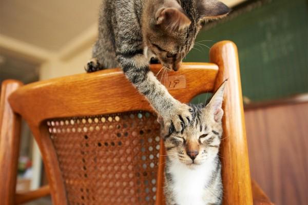 Gatos jugando sobre una silla