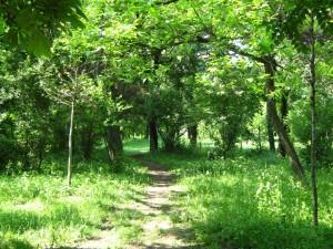 Camino estrecho en el bosque