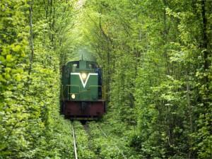 Tren en el interior de un bosque