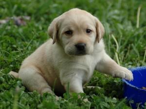 Bonito cachorro sentado en la hierba