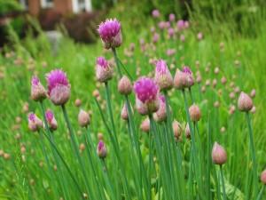 Flores creciendo en la hierba