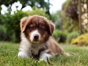 Un hermoso cachorro sobre la hierba
