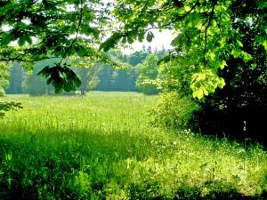 Postal: Un hermoso campo verde
