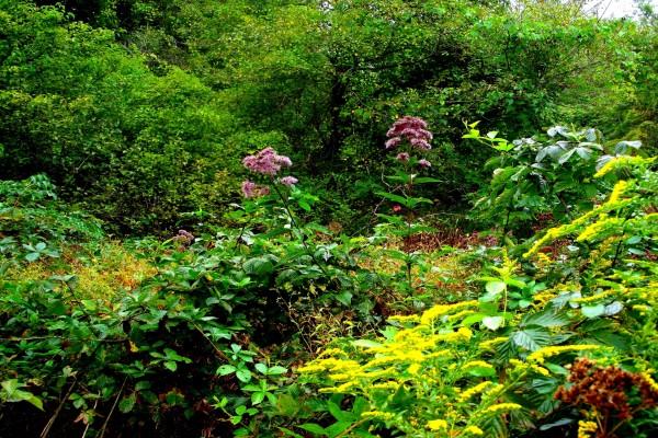 Plantas y flores silvestres