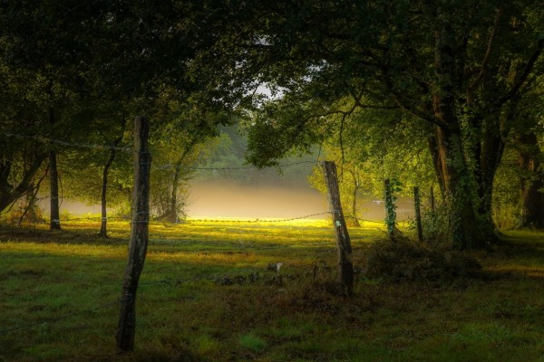 Una mañana con niebla en el bosque