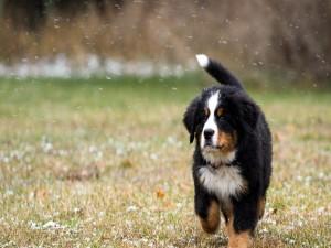 Un perro bajo los primeros copos de nieve