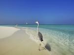 Aves caminando por una playa