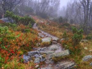 Postal: Niebla en el campo
