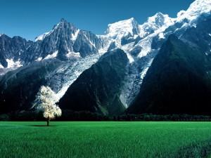 Hermoso árbol en un prado verde junto a grandes montañas