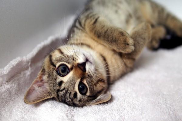 Gatito sobre una toalla
