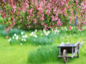Postal: Flores rosas colgando de un árbol