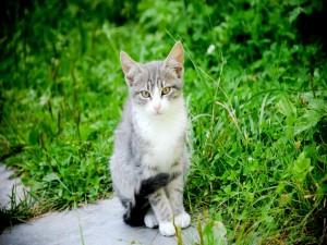 Gato sentado junto a la hierba