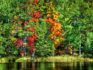 Postal: Árboles verdes y otoñales junto al agua