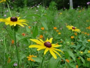 Bonitas flores silvestres de color amarillo