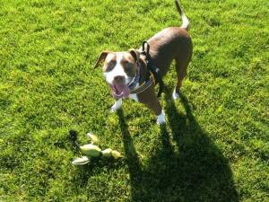 Perro jugando en la hierba