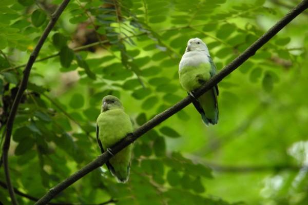 Dos hermosos pericos sobre una rama