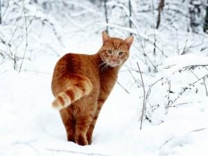 Un gato de paseo invernal