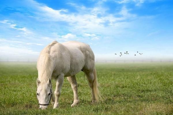 Caballo blanco en una pradera
