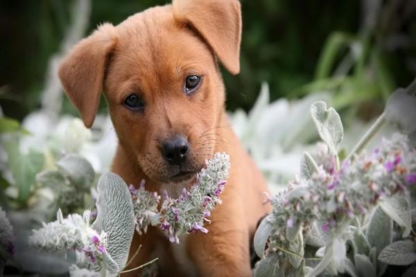 Lindo perrito entre las flores