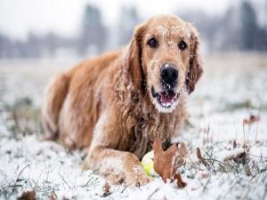 Un perro jugando en la nieve