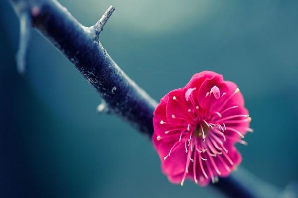 Una hermosa flor de color fucsia en una rama