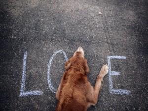 """Postal: Un perro formando parte de la palabra """"Love"""""""