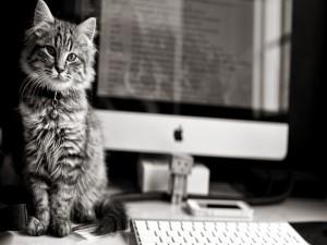 Hermoso gato junto a un ordenador Apple y Danbo