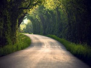 Postal: Pequeña carretera entre árboles verdes