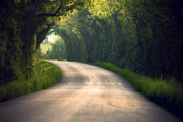 Pequeña carretera entre árboles verdes