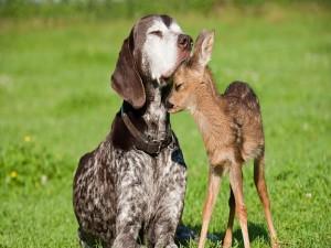 Un cervatillo y un perro dándose cariño
