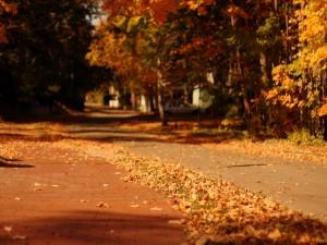 Calle cubierta de hojas otoñales