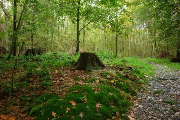 Musgo y árboles cortados en el bosque