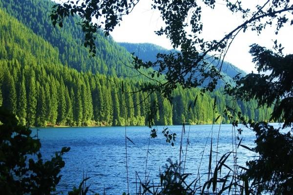 Magnífico pinar junto a un lago