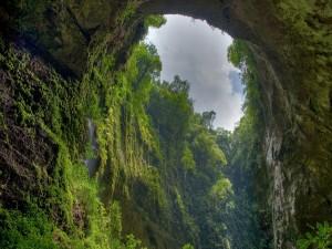 Arco en la selva