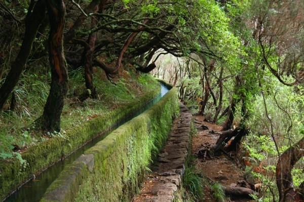 Acueducto en el bosque