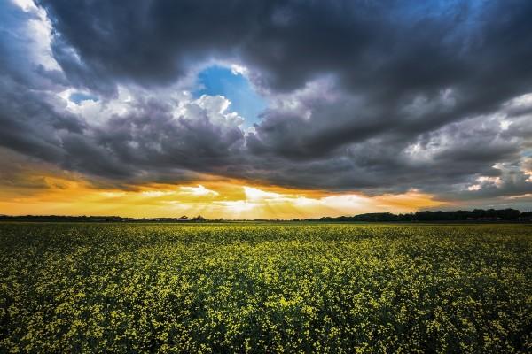 Cielo nuboso sobre un campo de flores amarillas
