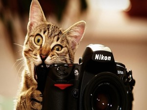 Postal: Gato mordiendo una cámara Nikon